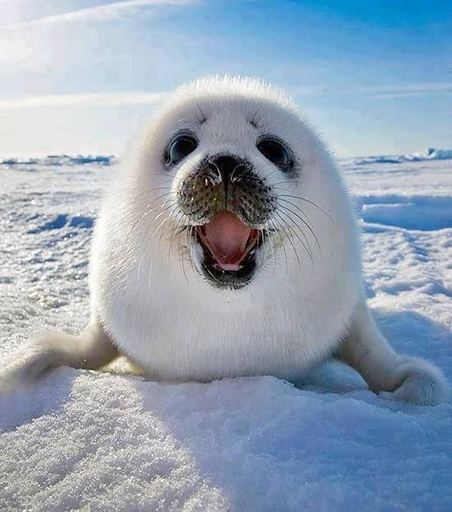 NRDC Seals