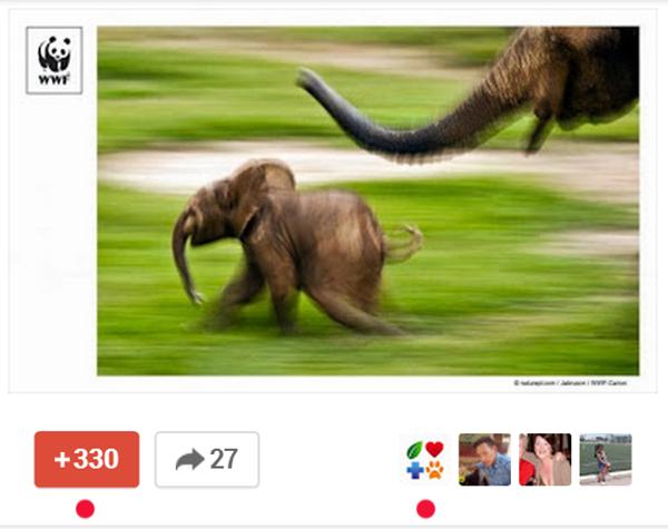 WWF on Google+