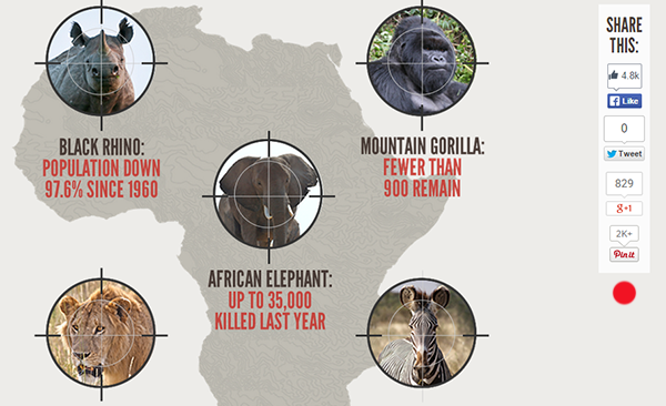 Poaching infographic