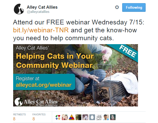 Twitter Image Alley Cat Allies